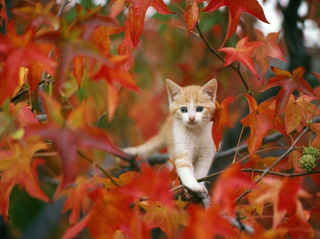 Autumn Wallpaper Desktop Collections | Cool Wallpaper