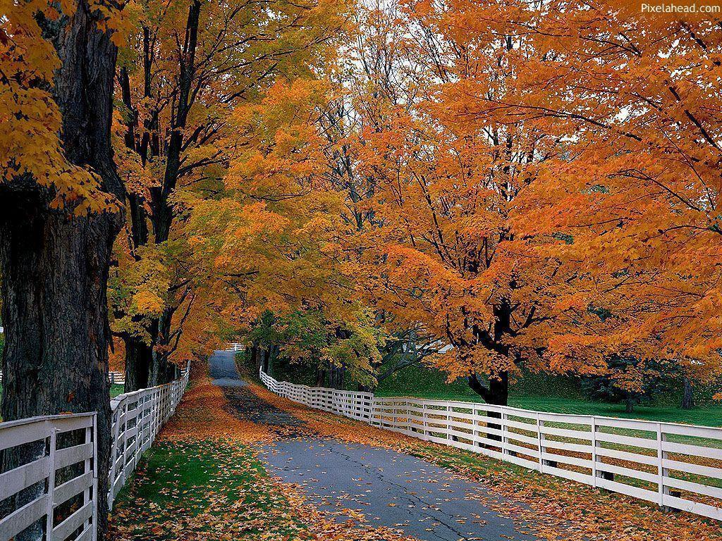 Fall Wallpaper – Autumn Season's Wallpapers (3723) – HD Desktop …