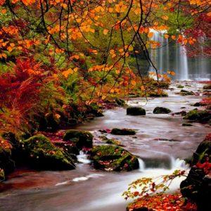 download Fall HD Wallpapers 1080p · Fall Wallpaper HD | Best Desktop …
