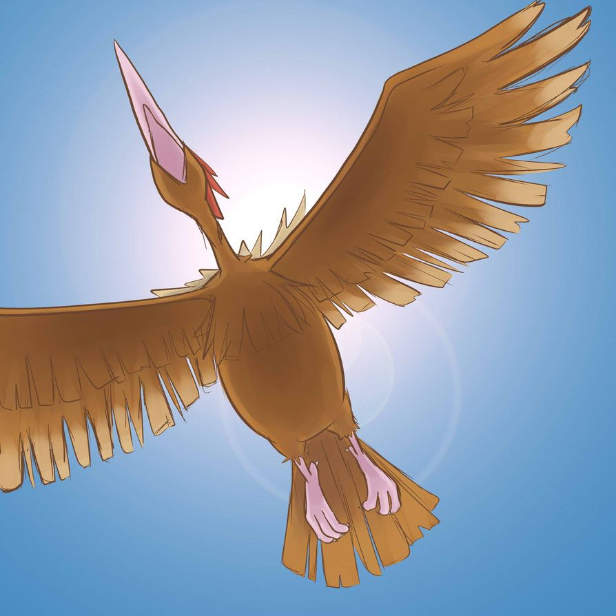 Fearow Wallpaper, PC Fearow Wallpaper Most Beautiful Images (Of …