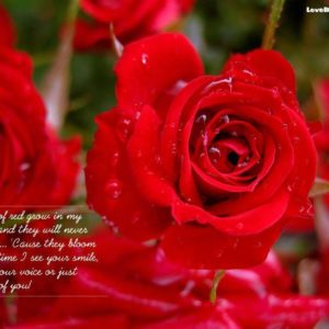 download Roses Wallpaper Free For Mobile