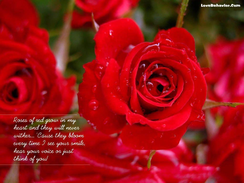 Roses Wallpaper Free For Mobile