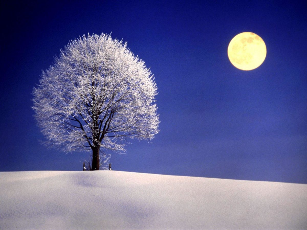 Winter Night with Full Moon widescreen wallpaper | Wide-
