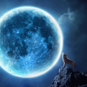 download Howling wolf full moon Wallpapers | Pictures