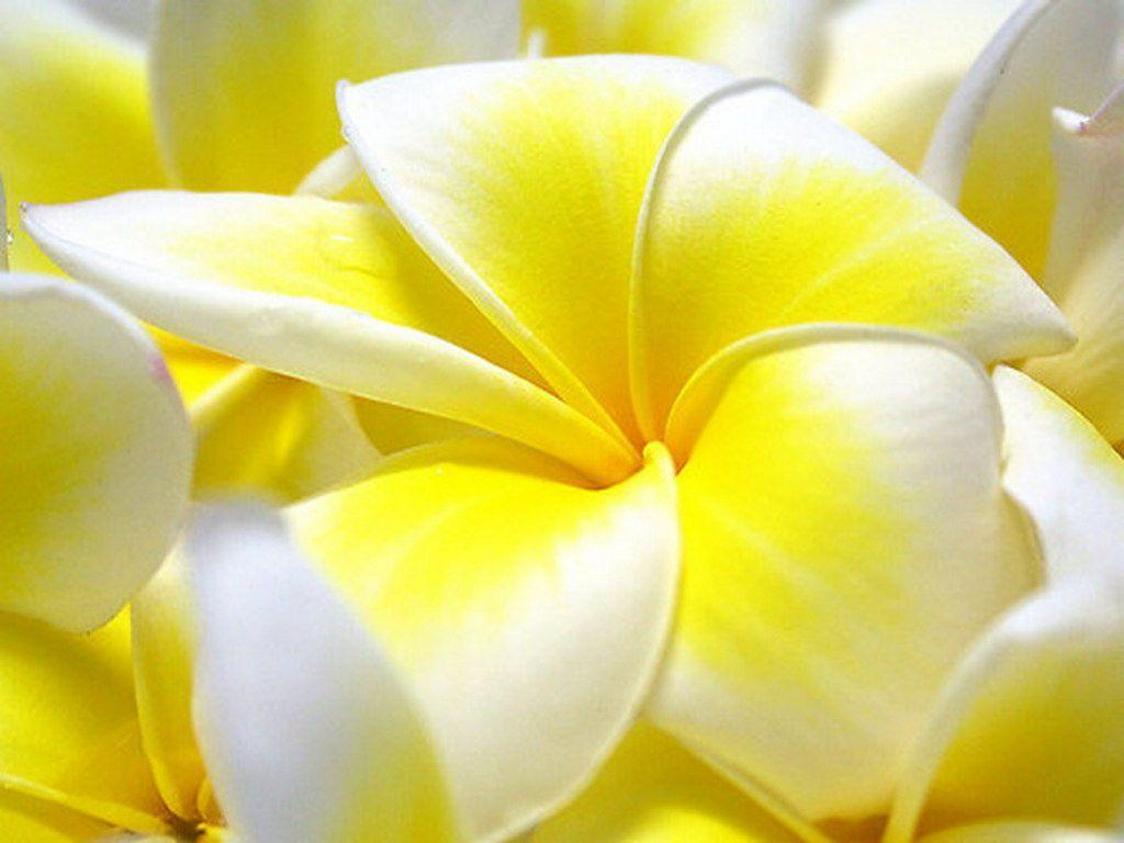 flowers wallpapers for desktop full size hd | Best Web For quotes …
