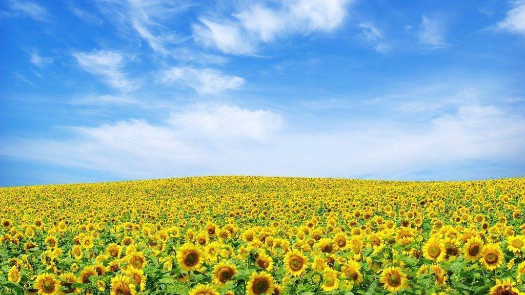 flowers-wallpapers-for-desktop-full-size-hd-2 | Best Web For …