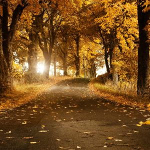 download Forest Road Wallpaper   Download Wallpapers