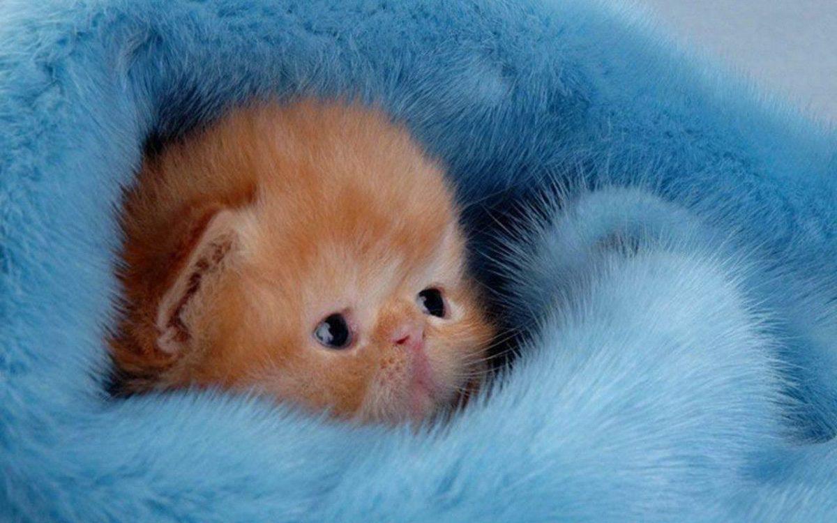 Cute Kitten Wallpaper – Kittens Wallpaper (16094695) – Fanpop