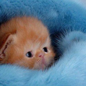 download Cute Kitten Wallpaper – Kittens Wallpaper (16094695) – Fanpop