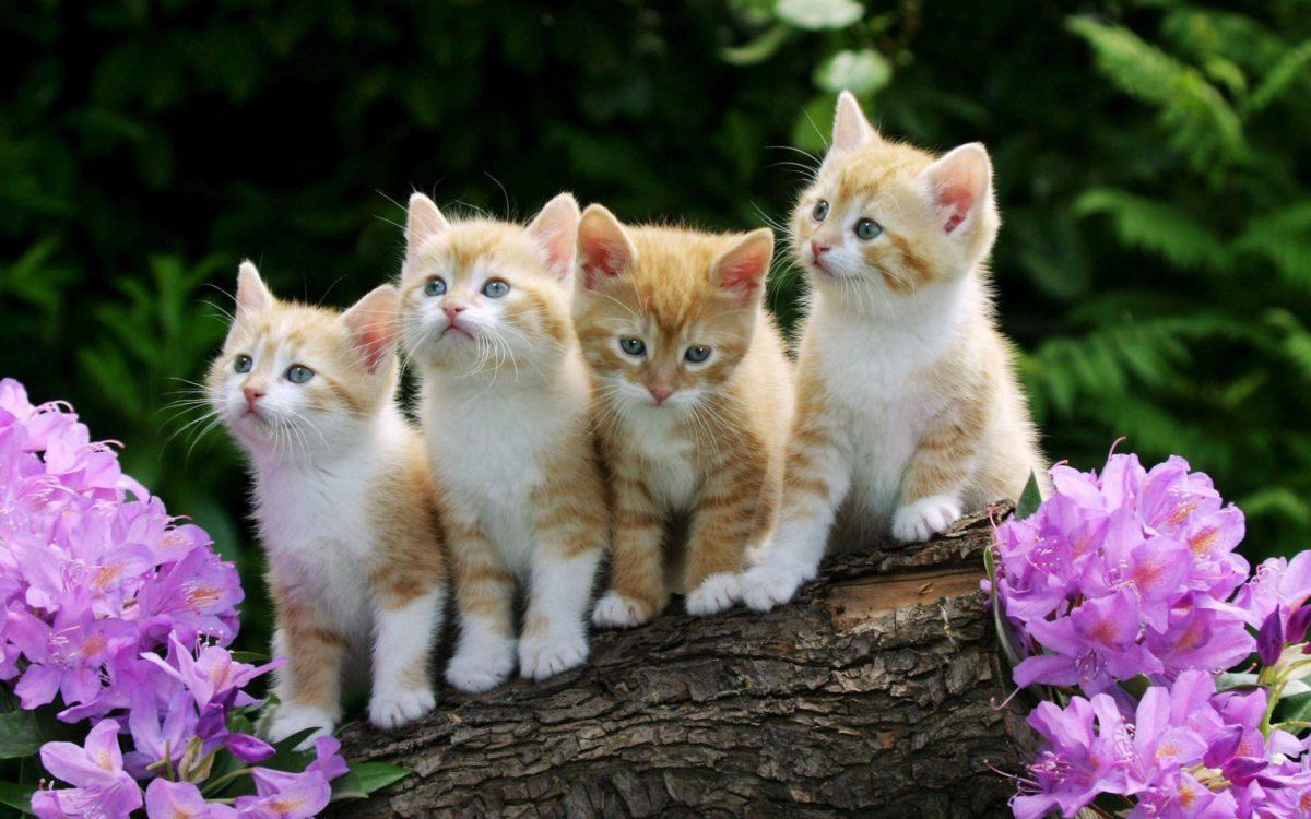 Cute Kittens Wallpapers 9674 Full HD Wallpaper Desktop – Res …
