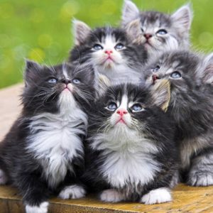 download Cute Cats and kittens wallpapers