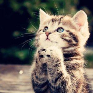download funny kittens wallpaper – www.wallpaper-free-download.com