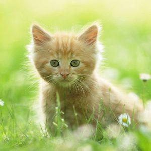 download Cute Kitten Wallpapers   HD Wallpapers
