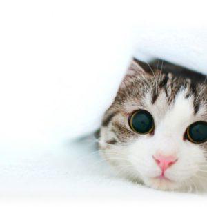 download Funny Kitten Wallpaper | Cat & Kitty Site