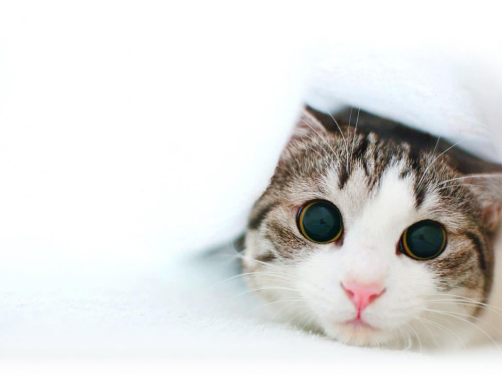 Funny Kitten Wallpaper | Cat & Kitty Site