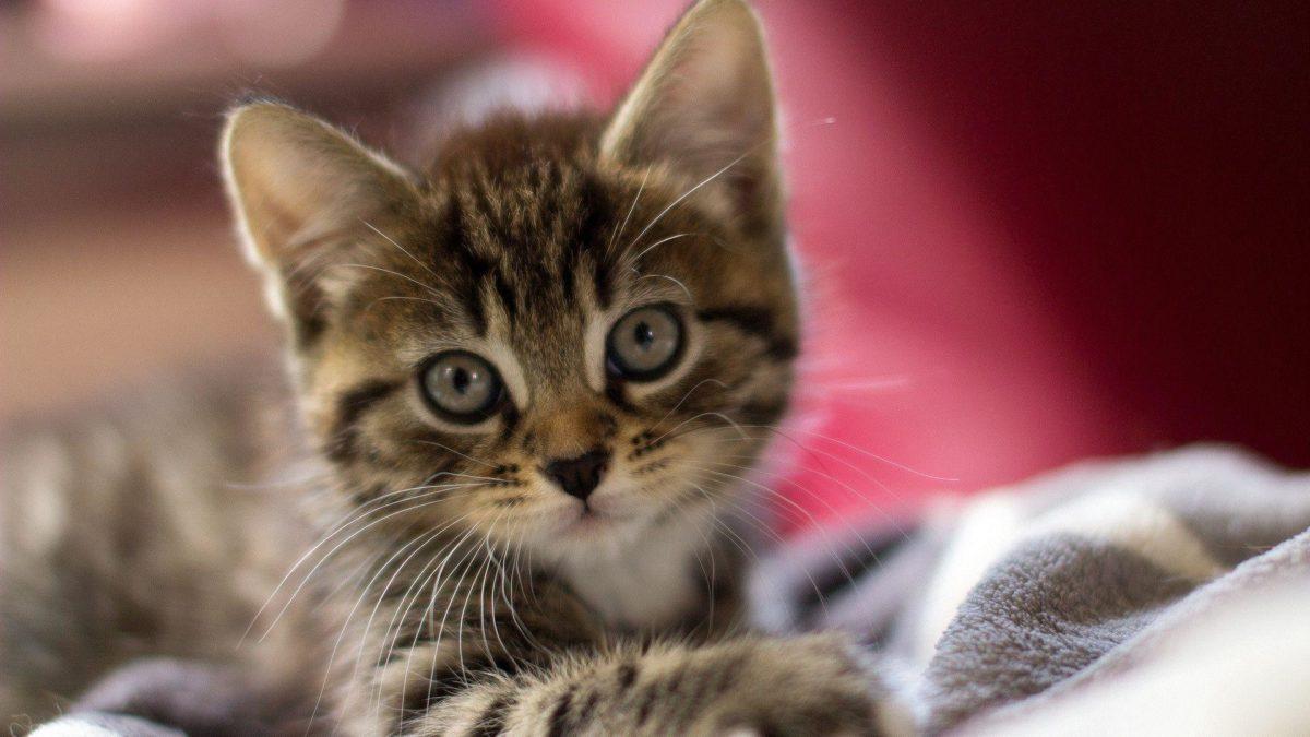 Cute Kitten Wallpaper Hd 1920x1080PX ~ Wallpaper Cute Kitten #23661