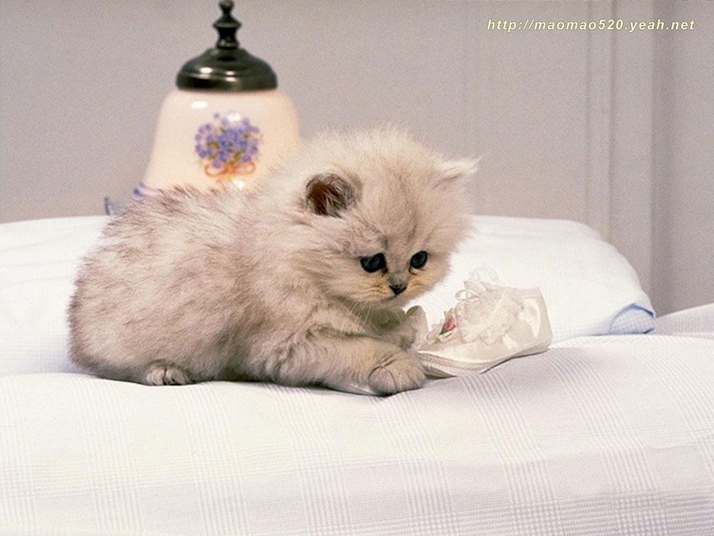 Cute Kittens Wallpapers – Animal Wallpapers (2592) ilikewalls.