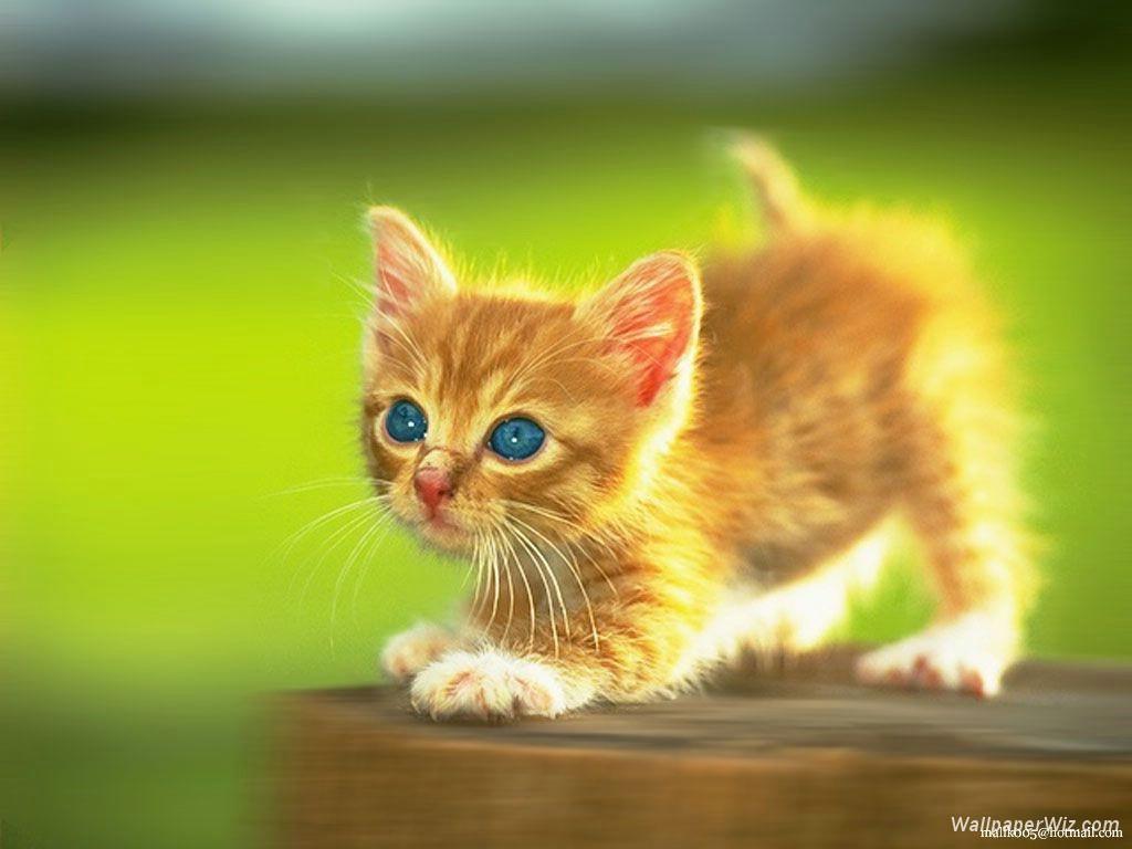 Cute Kittens Wallpaper | Cats Wallpaper HD
