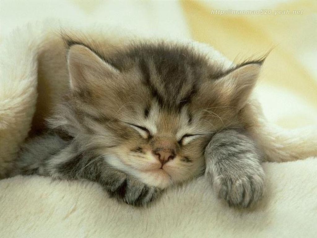 Cute Kittens Wallpapers – Animal Wallpapers (2399) ilikewalls.