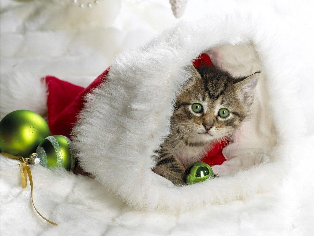 cute baby animals wallpapers: Cute Kittens Wallpapers Amazing