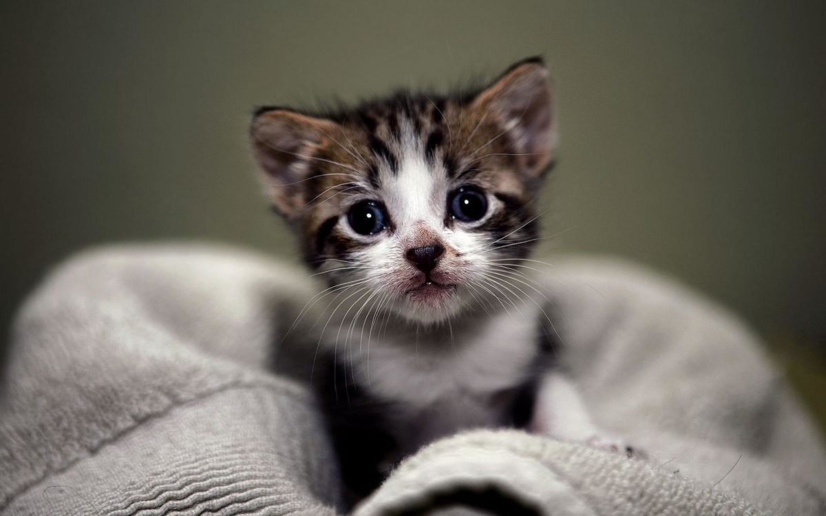 Cute Kittens Wallpapers Hd Images & Pictures – Becuo