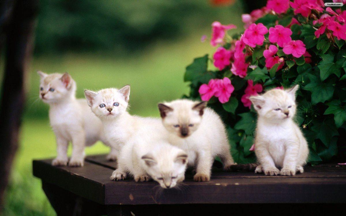 cute-wallpapers-kittens-7 – 2leepHD.