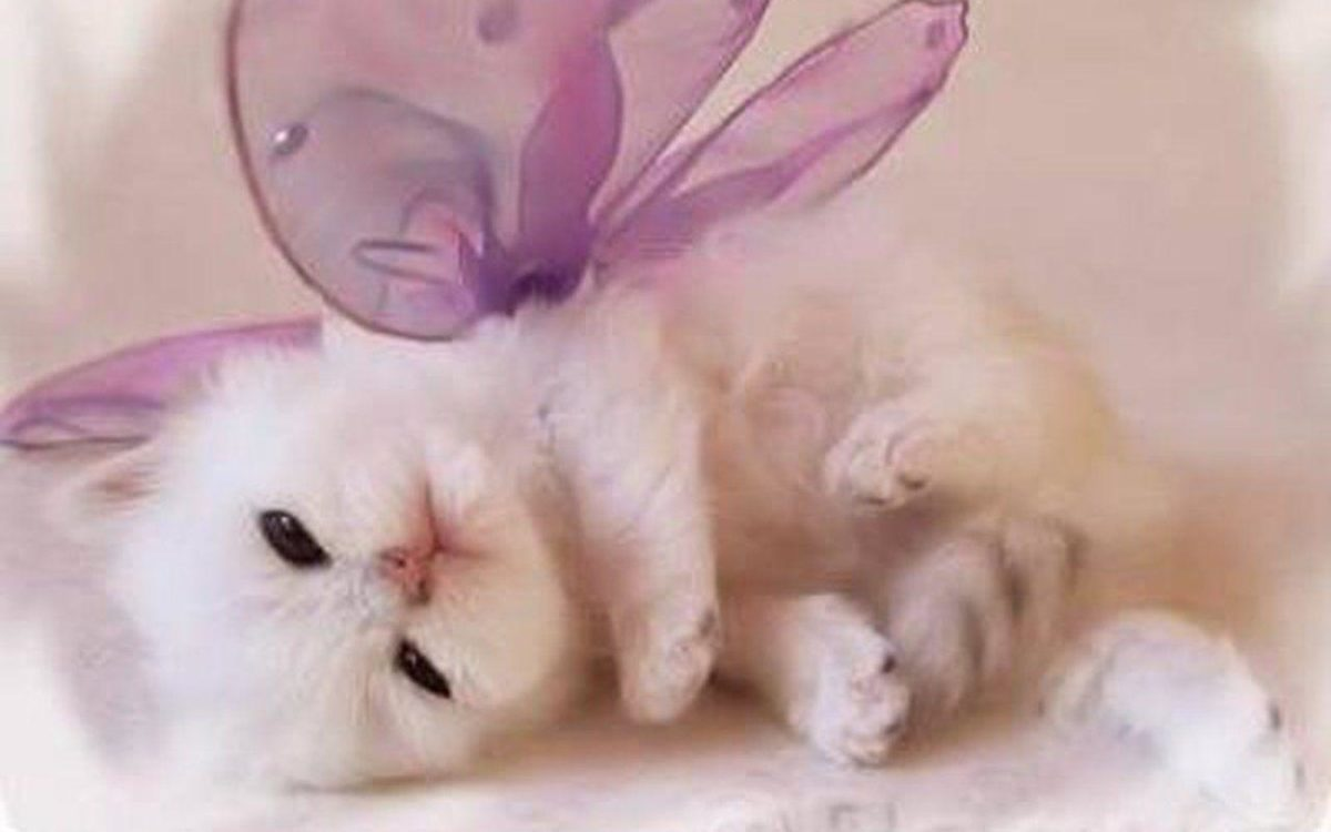 Kitten Wallpapers | HD Wallpapers Base