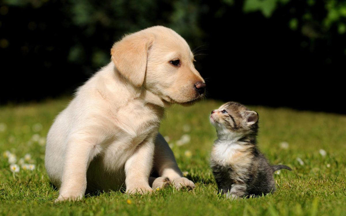 Cute Puppy Kitten Wallpapers | Pictures