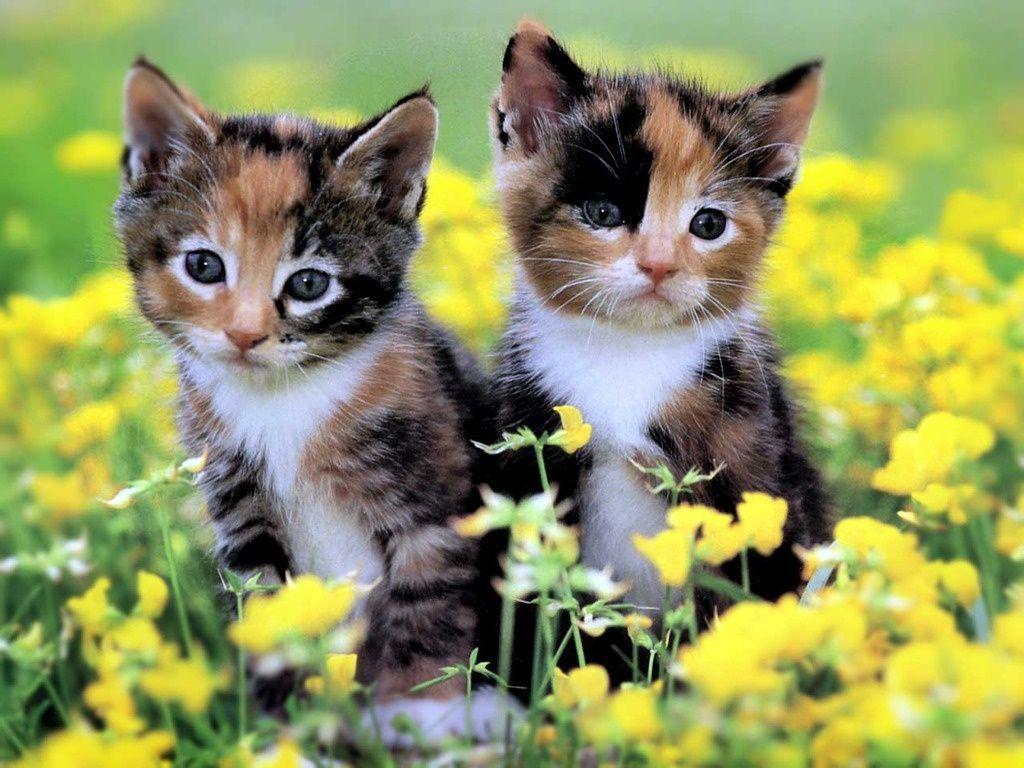 It's HD | Animals-Funny-Wallpapers: cute kittens wallpaper