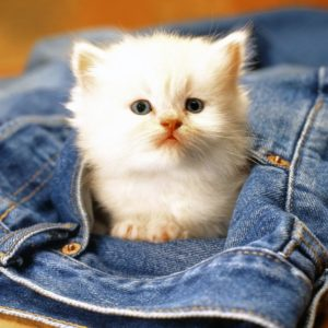 download Funny Animals Zone: Cute Baby Animals Pictures