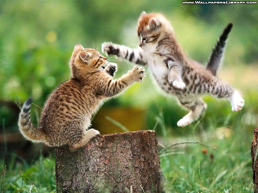 funny cute kittens wallpaper / funny backgrounds