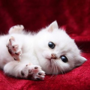 download Wallpapers For > Funny Kitten Wallpaper