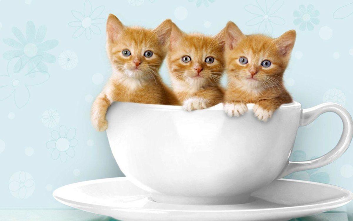 Kittens! on Pinterest | 33 Pins