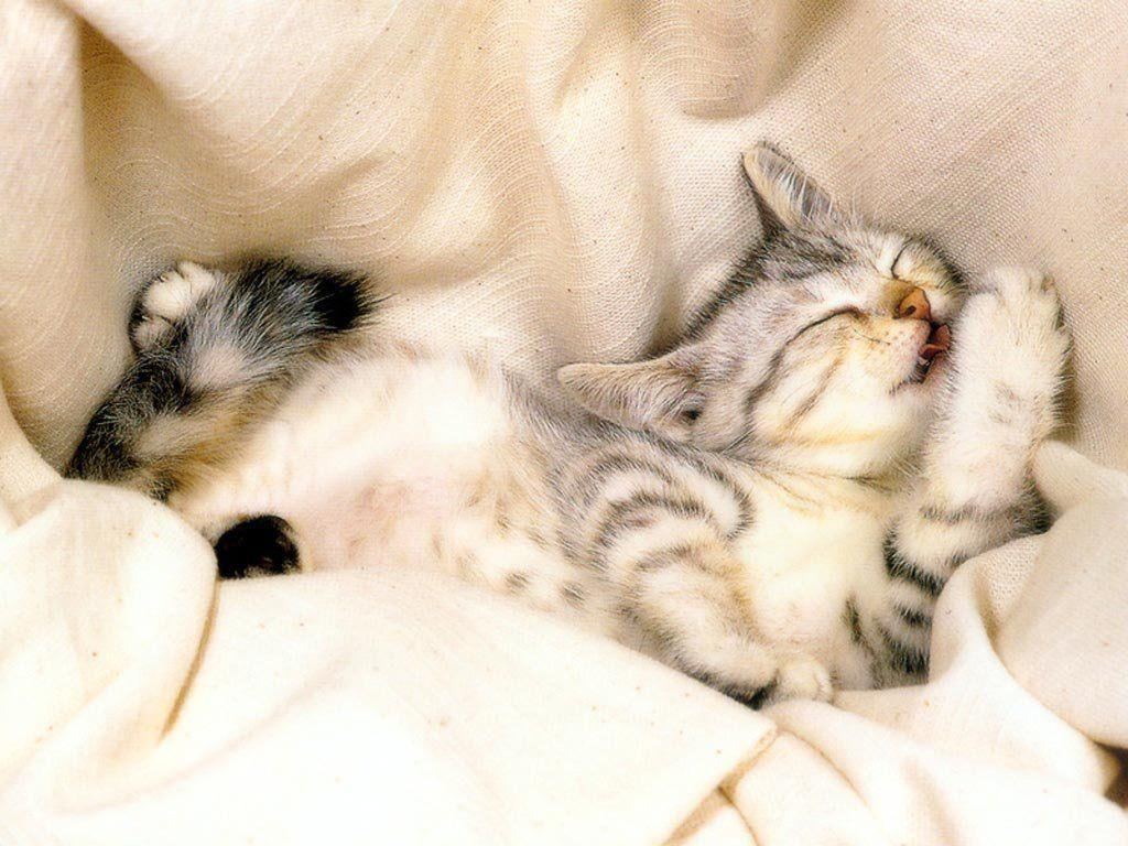 Funny Animals Zone: Funny Cat and Kittens Latest Pictures