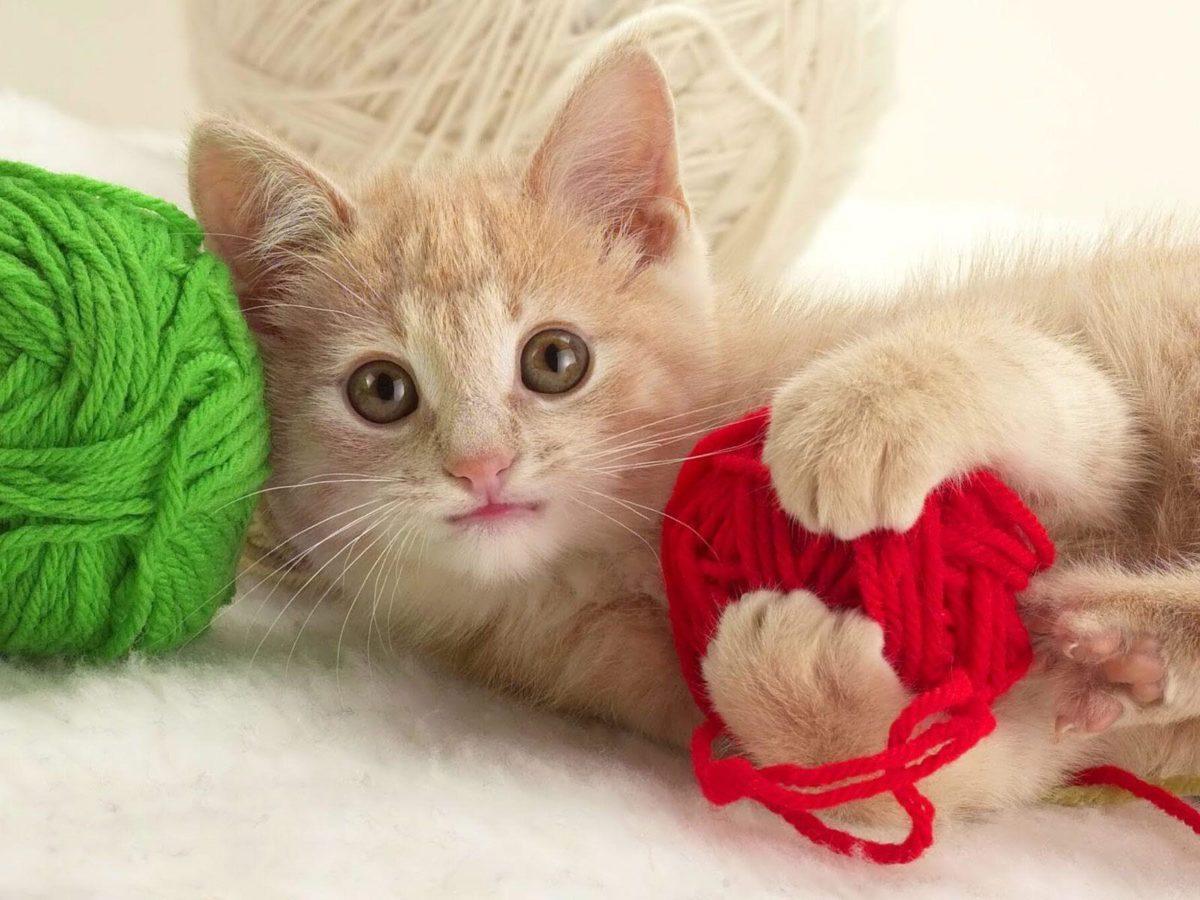 Funny kitten |