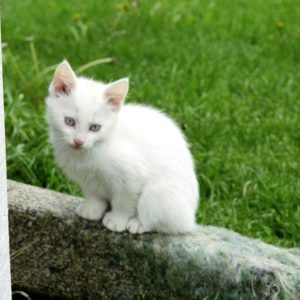 download Funny Animals Zone: Funny Kitten Wallpapers 2012