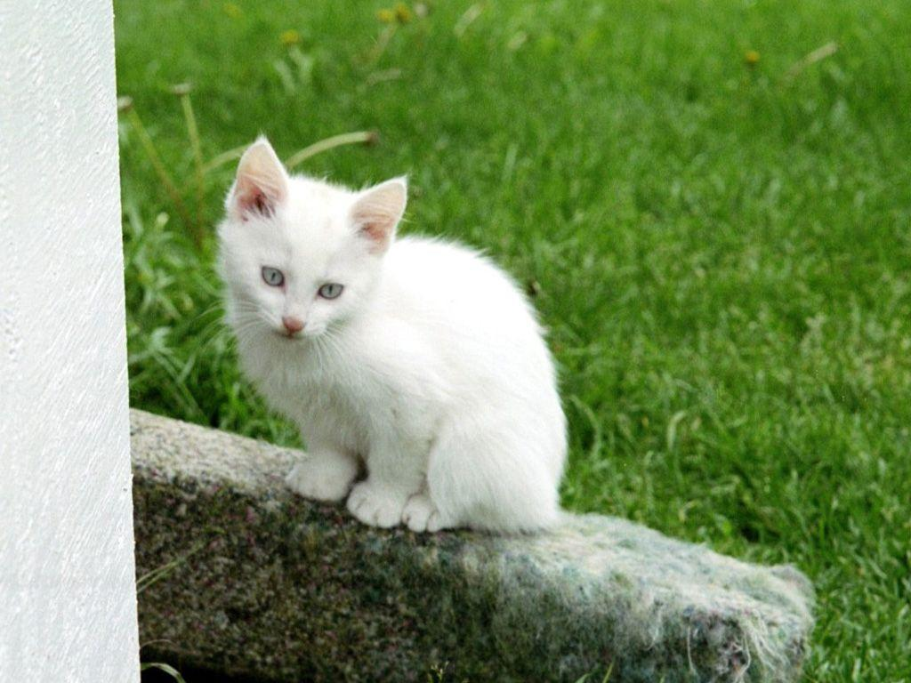 Funny Animals Zone: Funny Kitten Wallpapers 2012