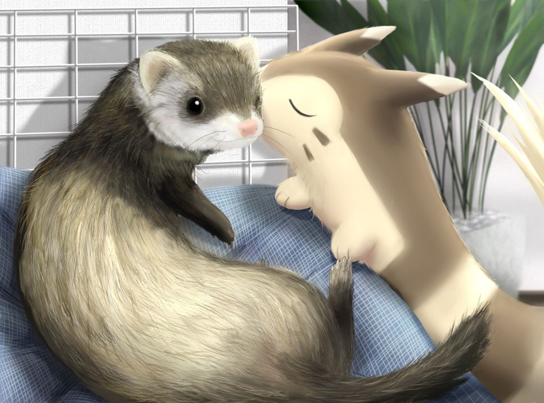 Furret – Pokémon – Zerochan Anime Image Board