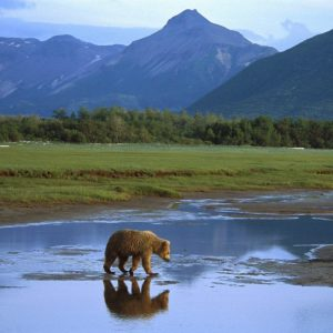 download Grizzly-Bear-HD-Wallpaper-6 – Animals Planent.