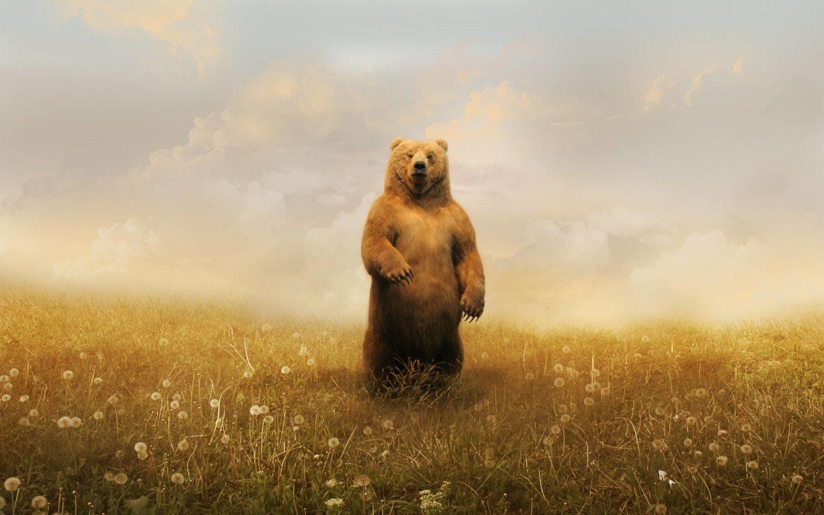 Bear Art Wallpaper – Viewing Gallery