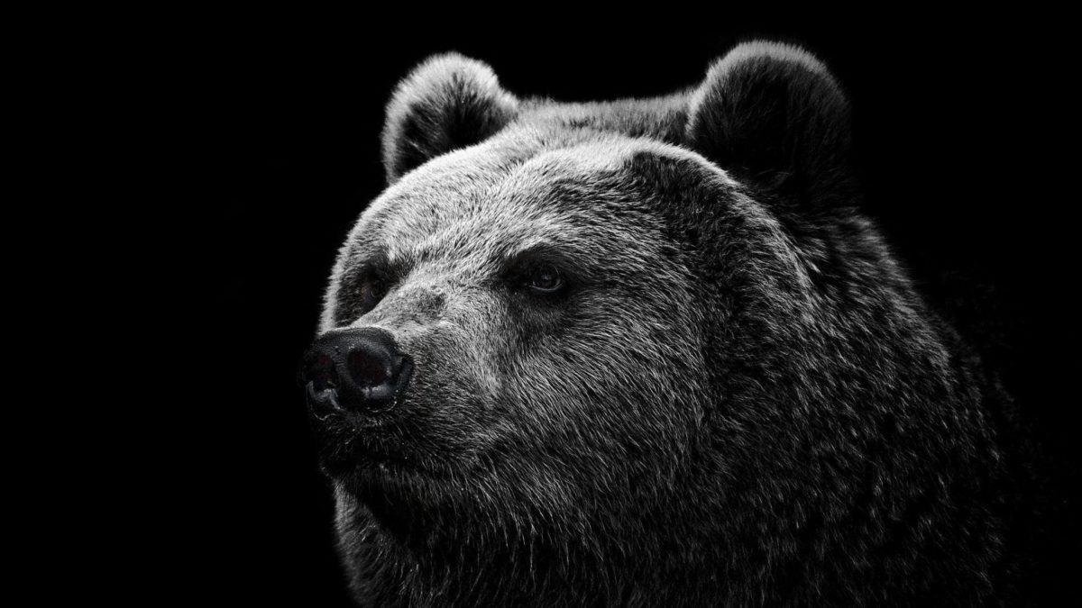 Hd Wallpapers Grizzly Bear Wallpaper Wild Big Grizzly 1280 X 960 …