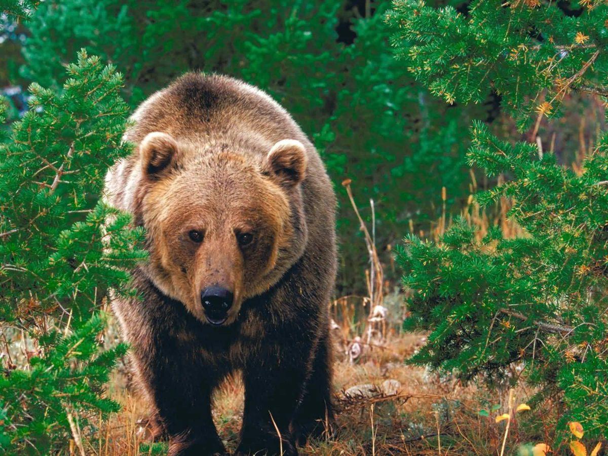 Bear Wallpapers | Bear Wallpapers – Part 2
