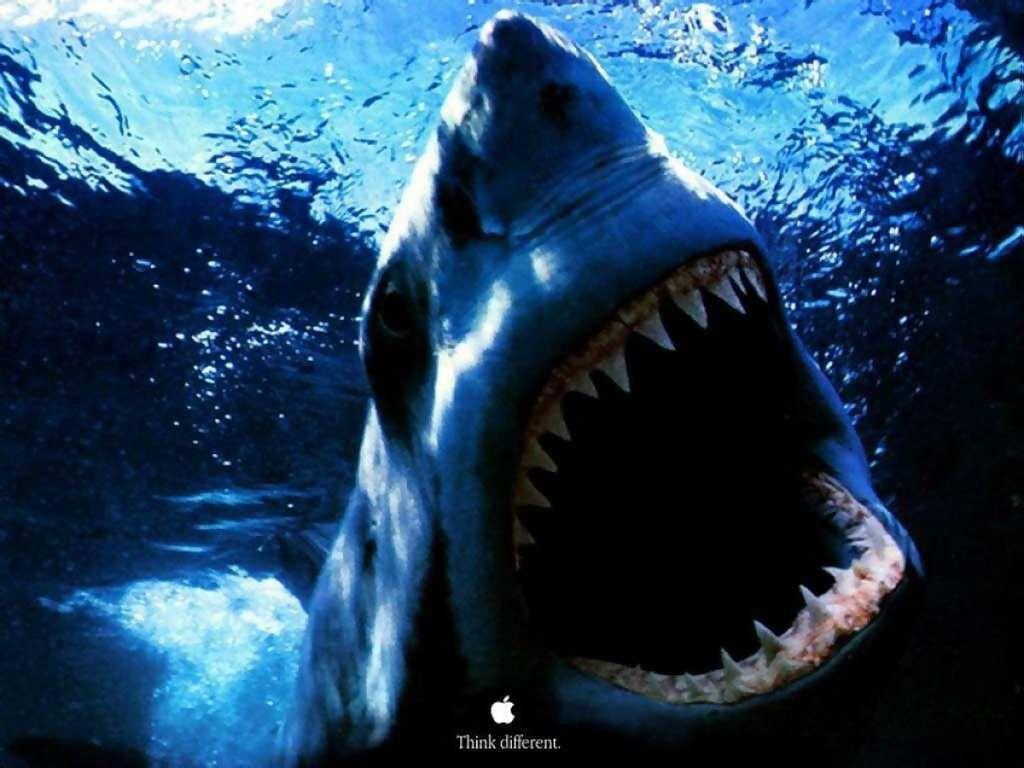 Shark HD Wallpapers – HD Wallpapers Inn