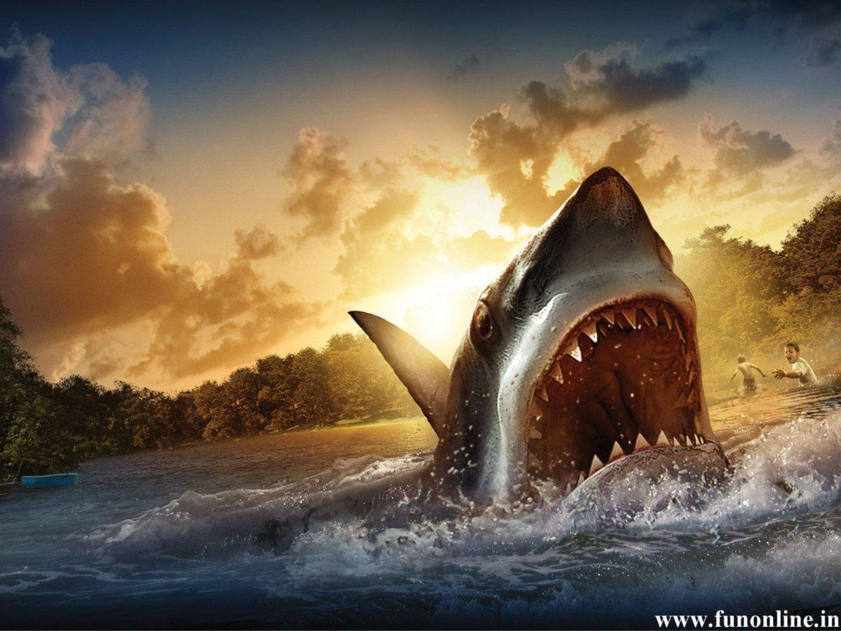 Shark Desktop HD Wallpapers – HD Wallpapers Inn
