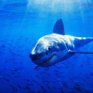 download Sharks and Killer Whales (55 HD Wallpapers) | Stuff Kit