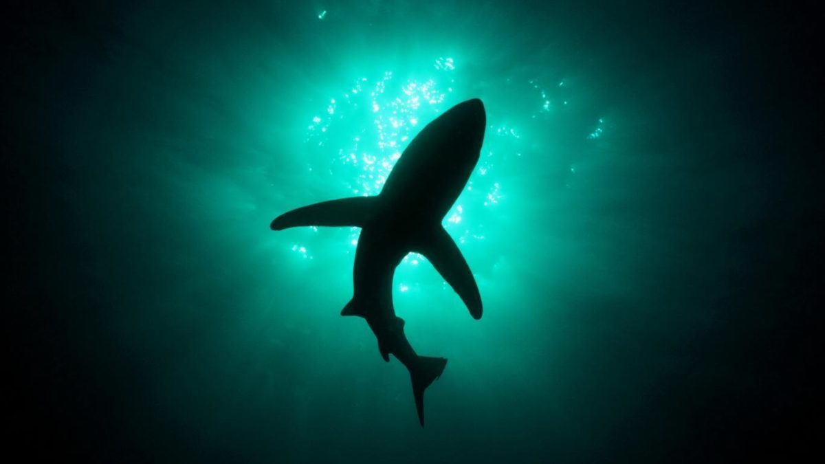 shark submarine hd free – Free Download Wallpaper Desktop …