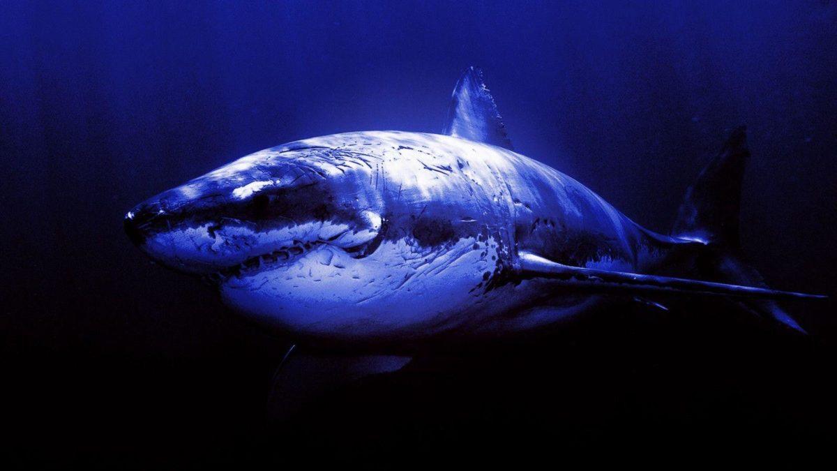 Widescreen Shark Wallpaper 03   hdwallpapers-