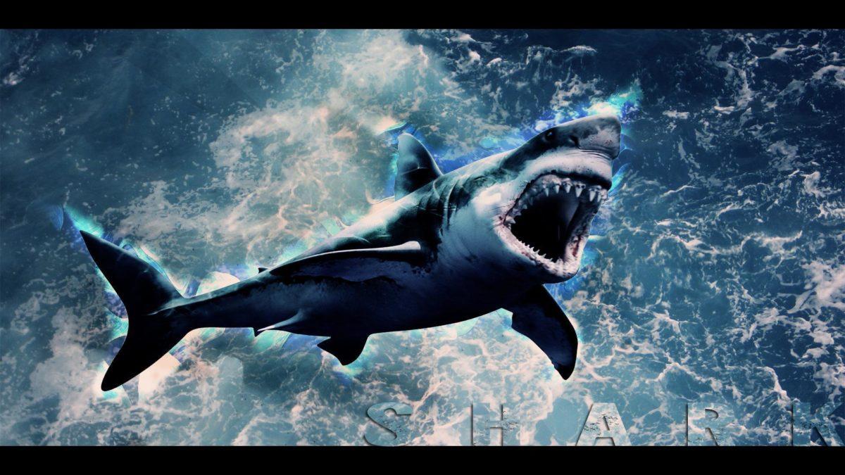 Shark Wallpaper HD by Tooyp on DeviantArt