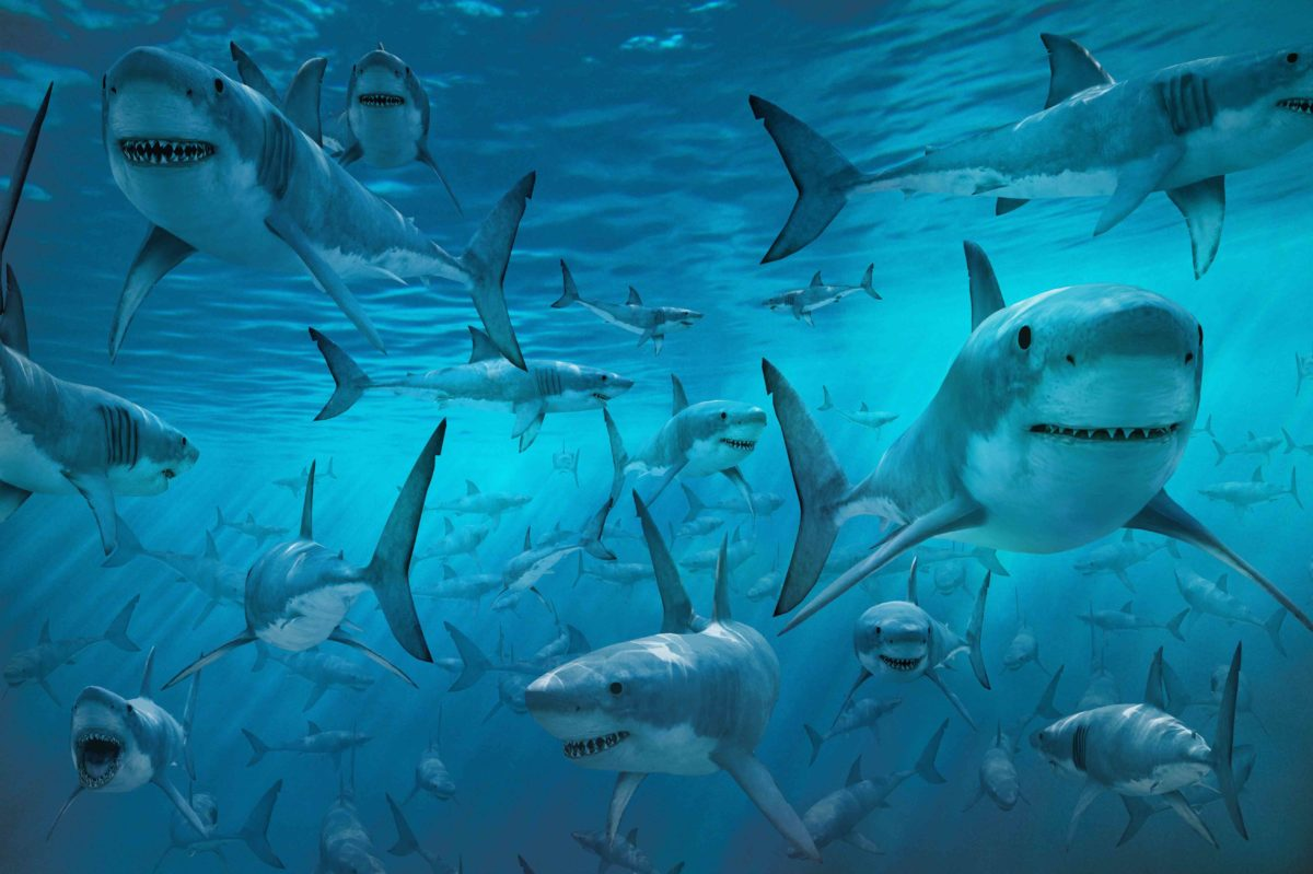 Shark HD Wallpapers Free Download | HD Wallpapers