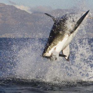 download Shark Week HD Wallpapers